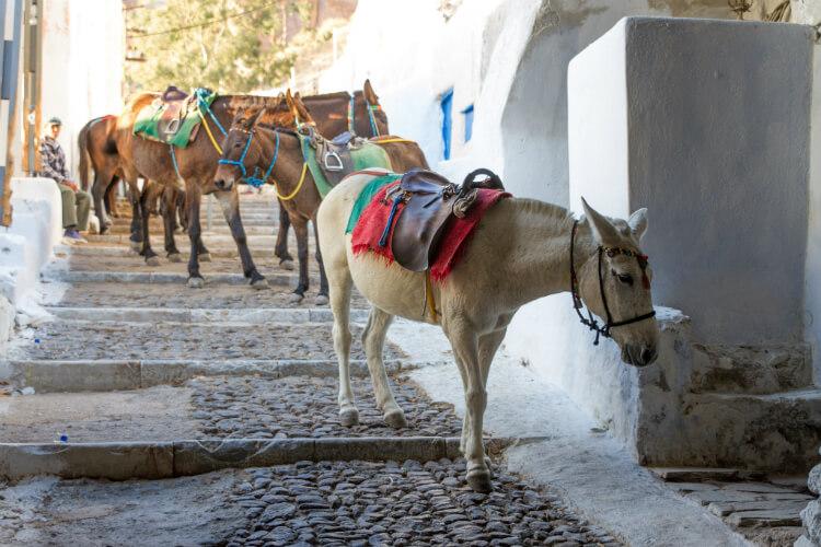 Donkey ride in Santorini